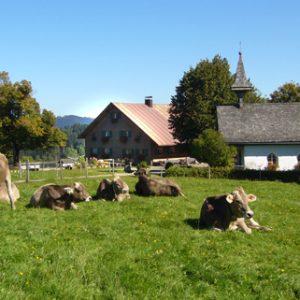 Alpe-Foto